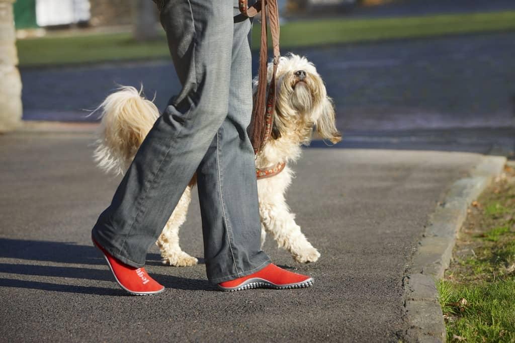 Leguno-hond-uitlaten
